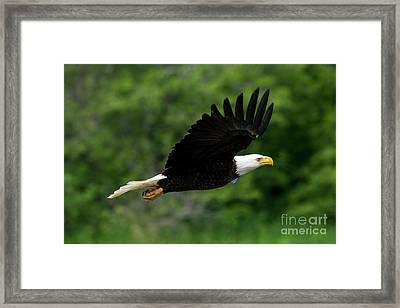Eagle Eye Framed Print by Mike Dawson