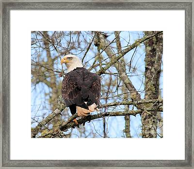 Eagle Eye On You  Framed Print