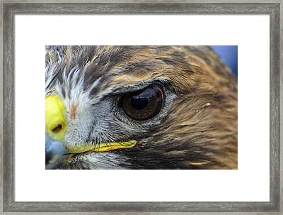 Eagle Eye Framed Print by Rainer Kersten