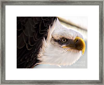 Eagle Eye Framed Print by Sherman Perry