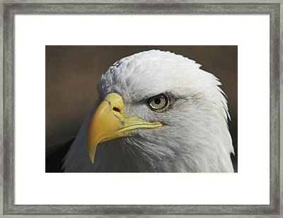 Framed Print featuring the photograph Eagle Eye by Steve Stuller