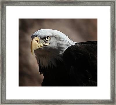 Framed Print featuring the photograph Eagle Eyed by Marie Leslie