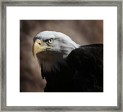 Eagle Eyed Framed Print
