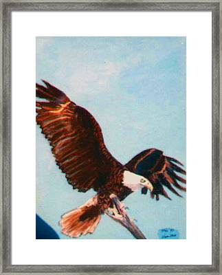 Eagle For Flight Framed Print by Stan Hamilton