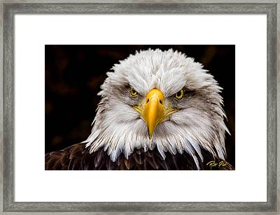Defiant And Resolute - Bald Eagle Framed Print by Rikk Flohr
