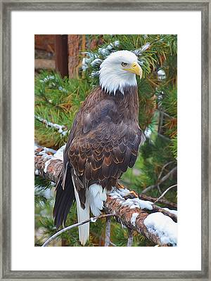 Eagle Glory Framed Print