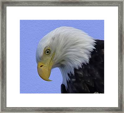 Eagle Head Paint Framed Print by Sheldon Bilsker