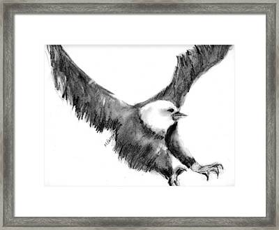 Eagle In Flight Framed Print by Marilyn Barton