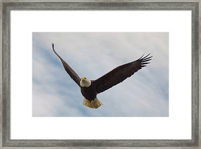 Eagle In The Big Sky Framed Print by Loree Johnson