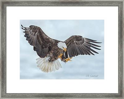 Eagle In The Clouds Framed Print by CR Courson