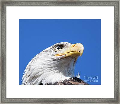 Framed Print featuring the photograph Eagle by Jim  Hatch