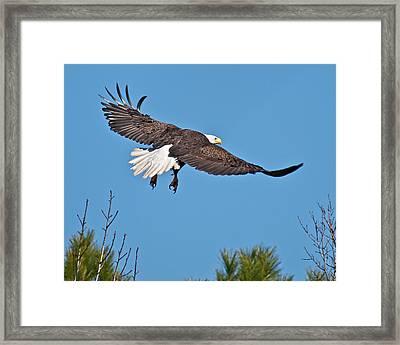 Eagle Launch Framed Print