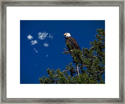 Eagle Framed Print by Leland D Howard