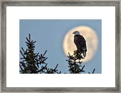 Eagle Moon Framed Print