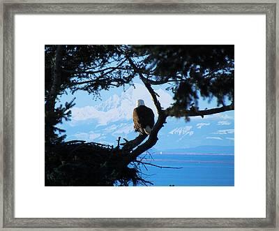 Eagle - Mt Baker - Eagles Nest Framed Print