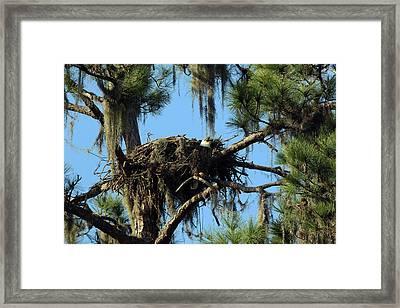 Eagle Nest Call Framed Print by David Yunker