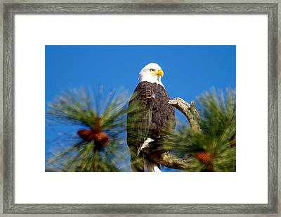 Eagle On A Sunny Day Framed Print by Jeff Swan