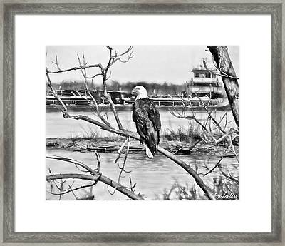 Eagle On The Illinois River Framed Print