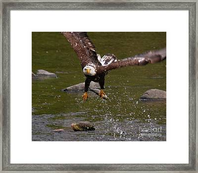 Framed Print featuring the photograph Eagle Over Seal Rock by Debbie Stahre