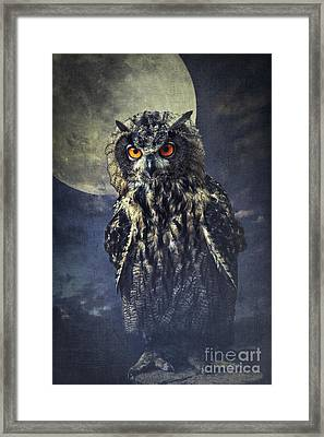 Eagle Owl Framed Print by Angela Doelling AD DESIGN Photo and PhotoArt