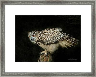 Eagle-owl Framed Print by CR Courson
