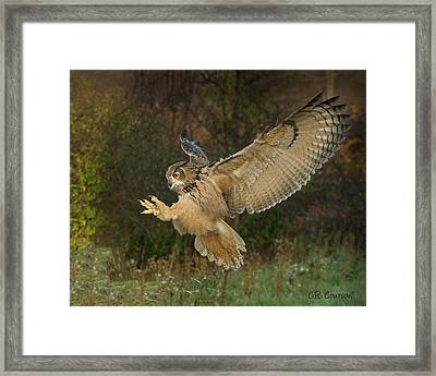 Eagle-owl Wings Back Framed Print by CR Courson