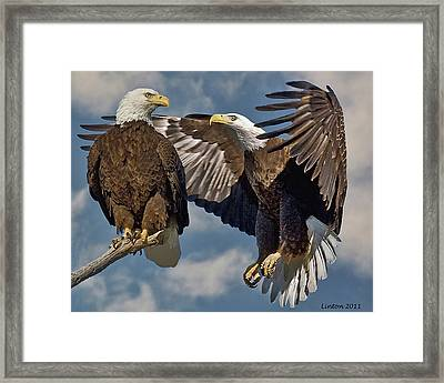Eagle Pair 3 Framed Print