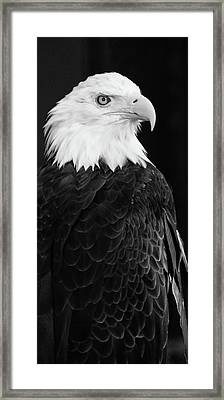 Eagle Portrait Special  Framed Print by Coby Cooper