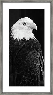 Eagle Portrait Special  Framed Print