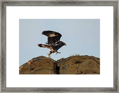 Eagle Rock Hopping Framed Print by Loree Johnson