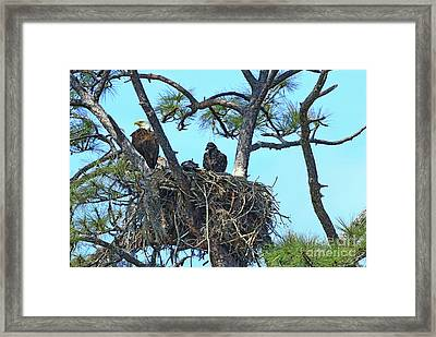 Framed Print featuring the photograph Eagle Series Baby by Deborah Benoit
