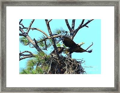 Framed Print featuring the photograph Eagle Series The Nest by Deborah Benoit