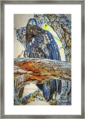 Eagle Series Tree Baby Framed Print