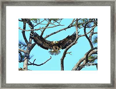 Framed Print featuring the photograph Eagle Series Wings by Deborah Benoit
