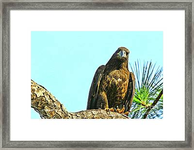 Eagle Series Here's Looking At You Framed Print