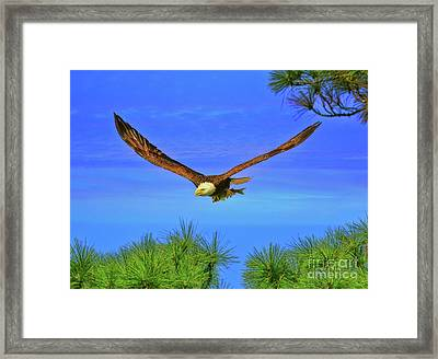 Framed Print featuring the photograph Eagle Series Through The Trees by Deborah Benoit