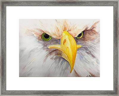 Eagle Stare Framed Print by Eric Belford