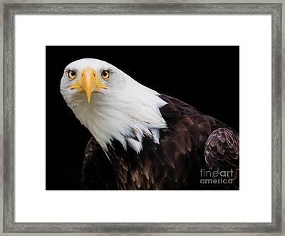 Eagle Stare Framed Print
