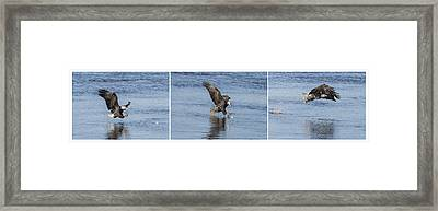 Eagle Triptych 2016-2 Framed Print