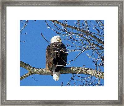 Eagle Watch Framed Print by Sue Stefanowicz