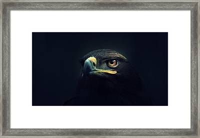 Eagle Framed Print by Zoltan Toth