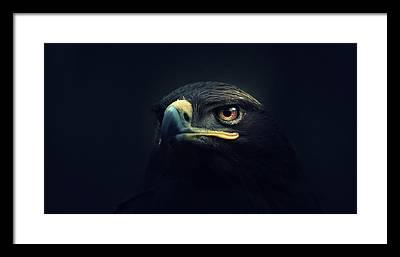 Eagle Framed Prints