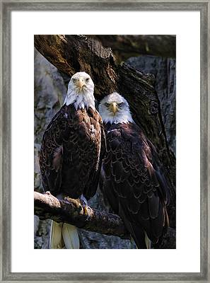 Eagles Framed Print