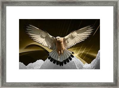 Eagles Fly Framed Print