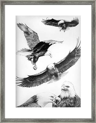 Eagles Gathering Framed Print by Bob Patterson