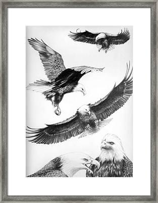 Eagles Gathering Framed Print