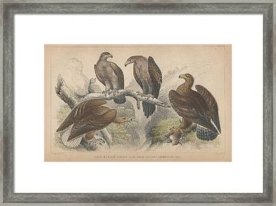 Eagles Framed Print by Anton Oreshkin