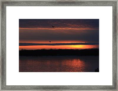 Eagles Over The Mississippi Framed Print by Dave Clark