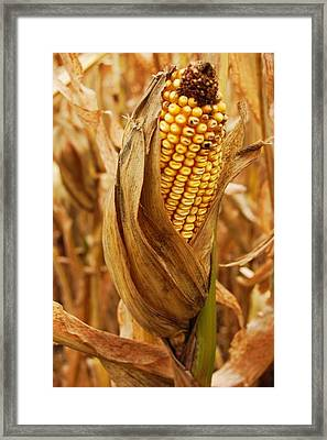Ear Framed Print by Jame Hayes