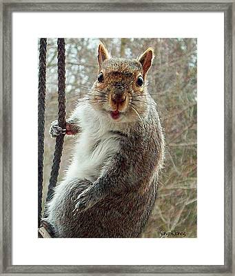 Earl The Squirrel Framed Print by Robert Orinski